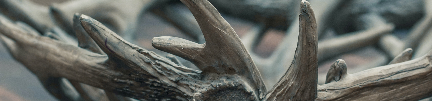 Photo of Antlers on Table